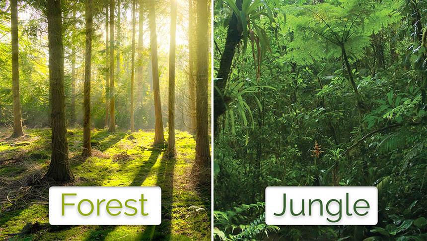 تفاوت کلمات forest و jungle